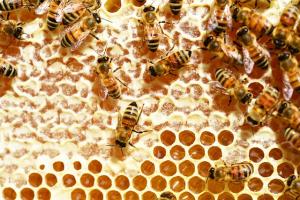 honung4